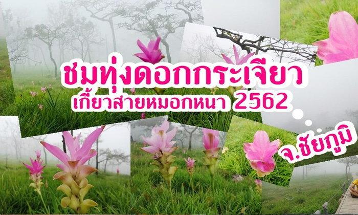 พาเที่ยวทุกดอกกระเจียวเกี้ยวสายหมอกหนา 2562 ที่ อ.เทพสถิต อ.ชัยภูมิ
