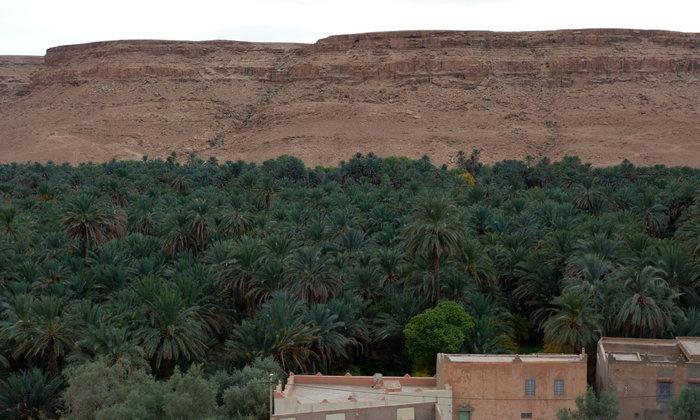 โอเอซีส(OASIS)ในทะเลทรายซาฮาร่า