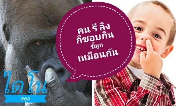 คน รึ ลิง ก็ชอบกินขี้มูกเหมือนกัน!!