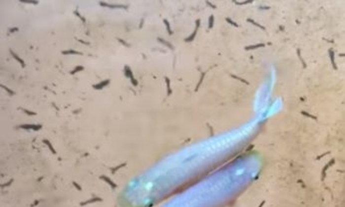 ปลาหัวตะกั่วนั้นเลี้ยงยังไงกันหนา ?