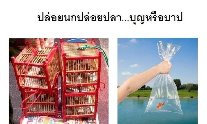 ปล่อยนกปล่อยปลา...บุญหรือบาป