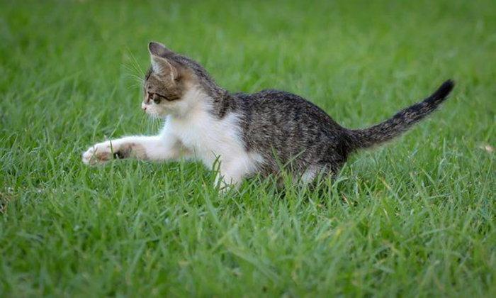 จดหมายถึงแมว ฉบับที่ ๑ : แมวนะ ไม่ใช่กระต่าย
