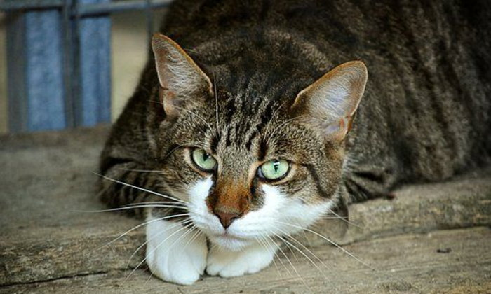 จดหมายถึงแมว ฉบับที่ ๗ : อย่าเอาหนูมาอวดแม่อีกนะ
