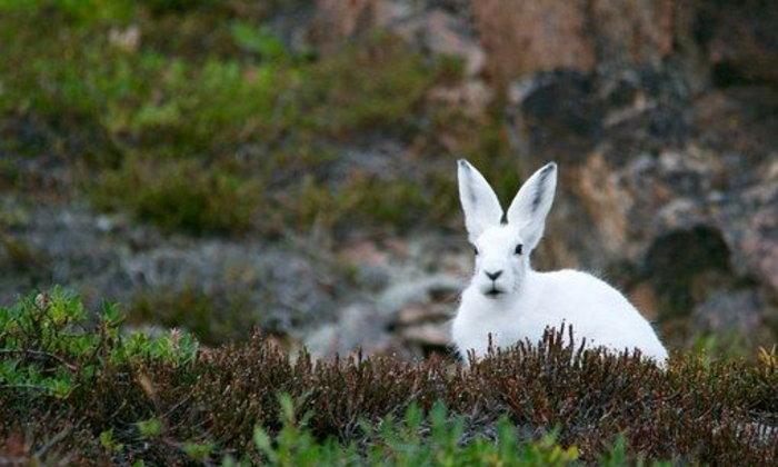 จดหมายถึงกระต่าย ฉบับที่ ๑ : กระต่ายที่เป็นกระต่ายจริงๆ นะจ๊ะ