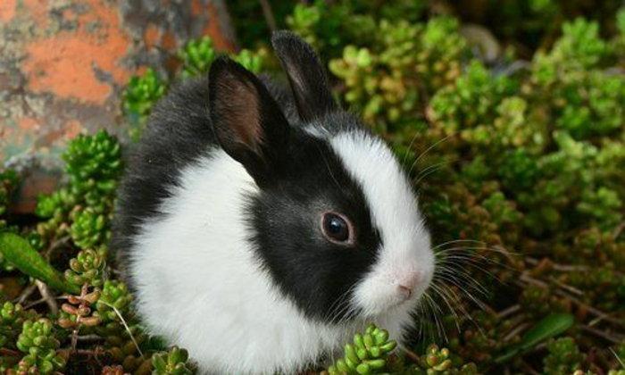 จดหมายถึงกระต่าย ฉบับที่ ๒ : การสูญเสียของเธอจ้ะ