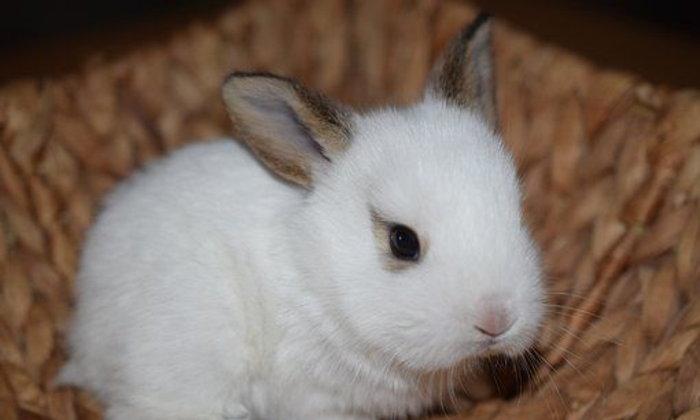 จดหมายถึงกระต่าย ฉบับที่ ๔ : เล่าถึงพฤติกรรมแปลกๆ จ้ะ