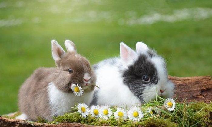 จดหมายถึงกระต่าย ฉบับที่ ๗ : การต่อสู้อย่างแข็งแกร่งของคุณนายทัชช่า