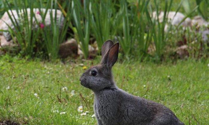 จดหมายถึงกระต่าย ฉบับที่ ๘ : ความสูญเสียของเธอ
