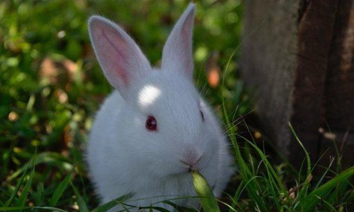 จดหมายถึงกระต่าย ฉบับที่ ๙ : การฟื้นฟูวงศ์ตระกูลของคุณนายทัชช่า