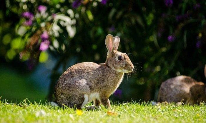 จดหมายถึงกระต่าย ฉบับที่ ๑๑ : ลีลาชีวิตของคุณนายทัชช่า