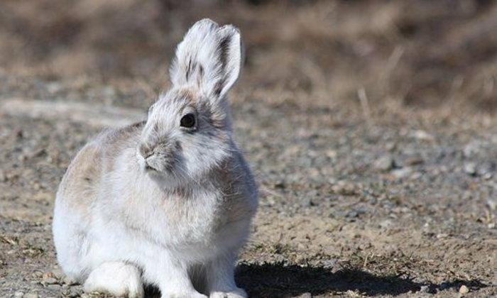 จดหมายถึงกระต่าย ฉบับที่ ๑๒ : ขอเป็นฉบับสุดท้ายนะจ๊ะ