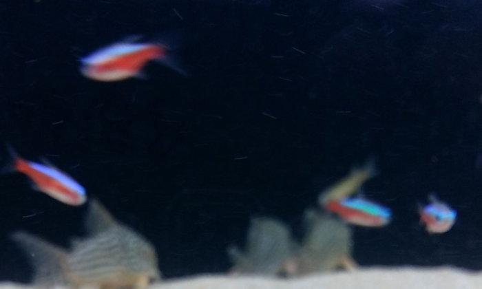 ปลา และสัตว์น้ำอะไรที่คอยช่วยเก็บเศษอาหารในตู้ได้ดีๆ บ้างครับ ?