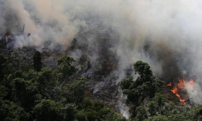 เราทำอะไรได้บ้างนอกจากติดแฮชแท็ก #PrayForAmazonia? 7 ช่องทางบริจาคเพื่อช่วยผืนปอดของโลก