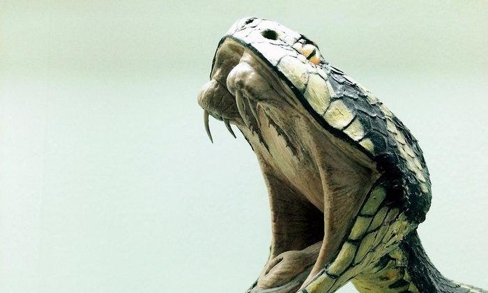 อย่าประมาท งูหัวขาด!...เพราะมันยังกัดได้อีก!
