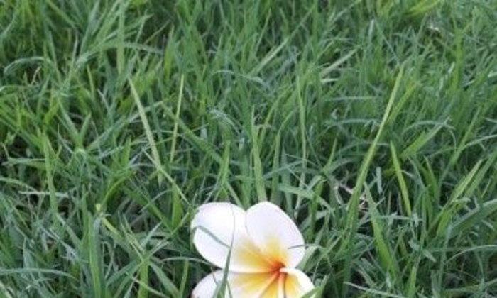หน้าที่กับดอกไม้