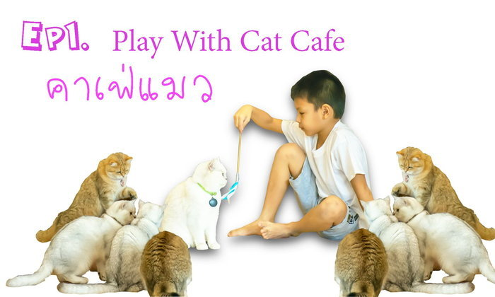 คาเฟ่แมว หรือ Play With Cat Cafe ไปนั่งกินกาแฟ ถ่ายรูป และเล่นแมวน่ารักๆ กันให้เพลินเลย