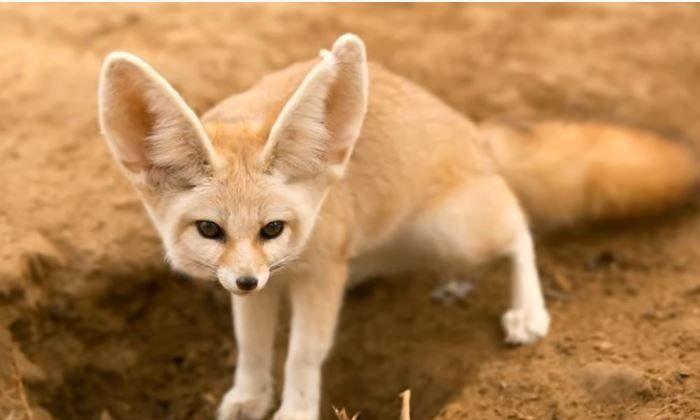 10 อันดับสัตว์แปลกที่หลายคนเข้าใจผิดคิดว่าเป็นสัตว์ป่า