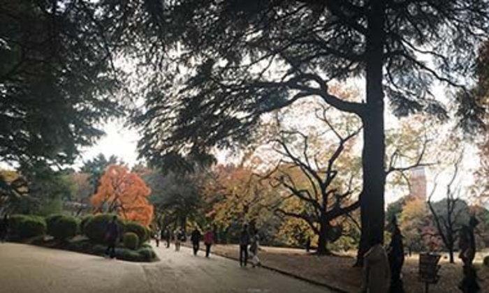 ใบไม้สีสวย สวนชินจูกุ