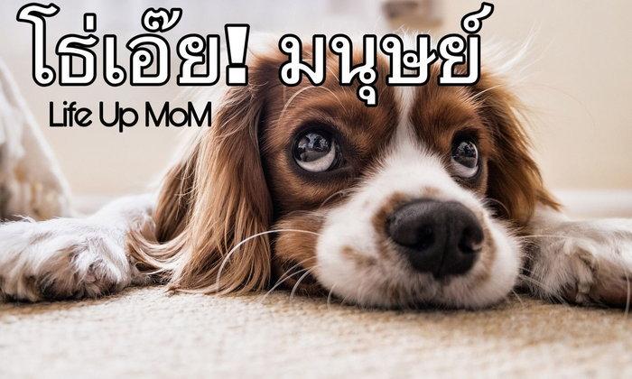 หมาเมิน...