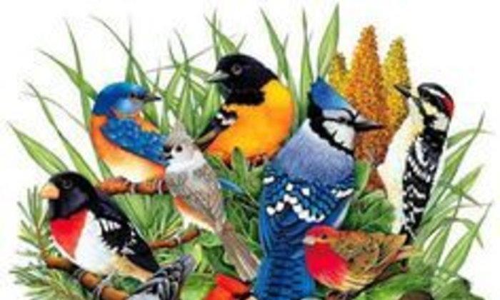 "The World's Meaningful Symbols: Episode 2 ""The Famous Symbols of Birds"""