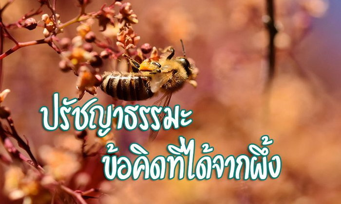 ปรัชญาธรรมะ ข้อคิดที่ได้จากผึ้ง