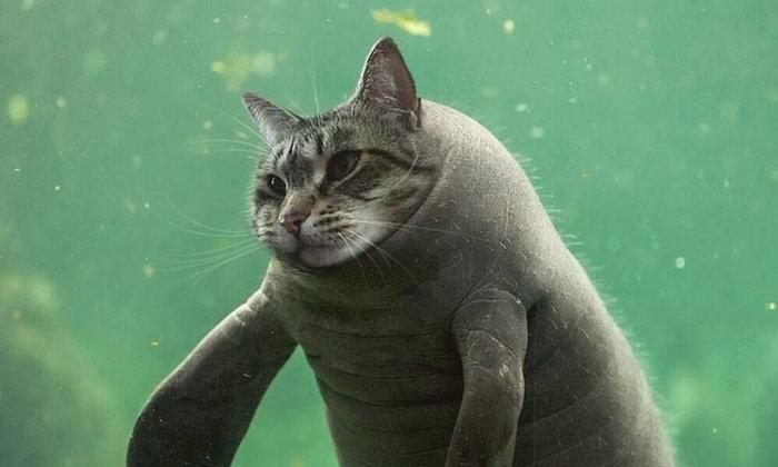 11 ภาพ Meowtation เอ้ย! Mutation เมื่อแมวกลายพันธุ์เป็นสัตว์อื่น