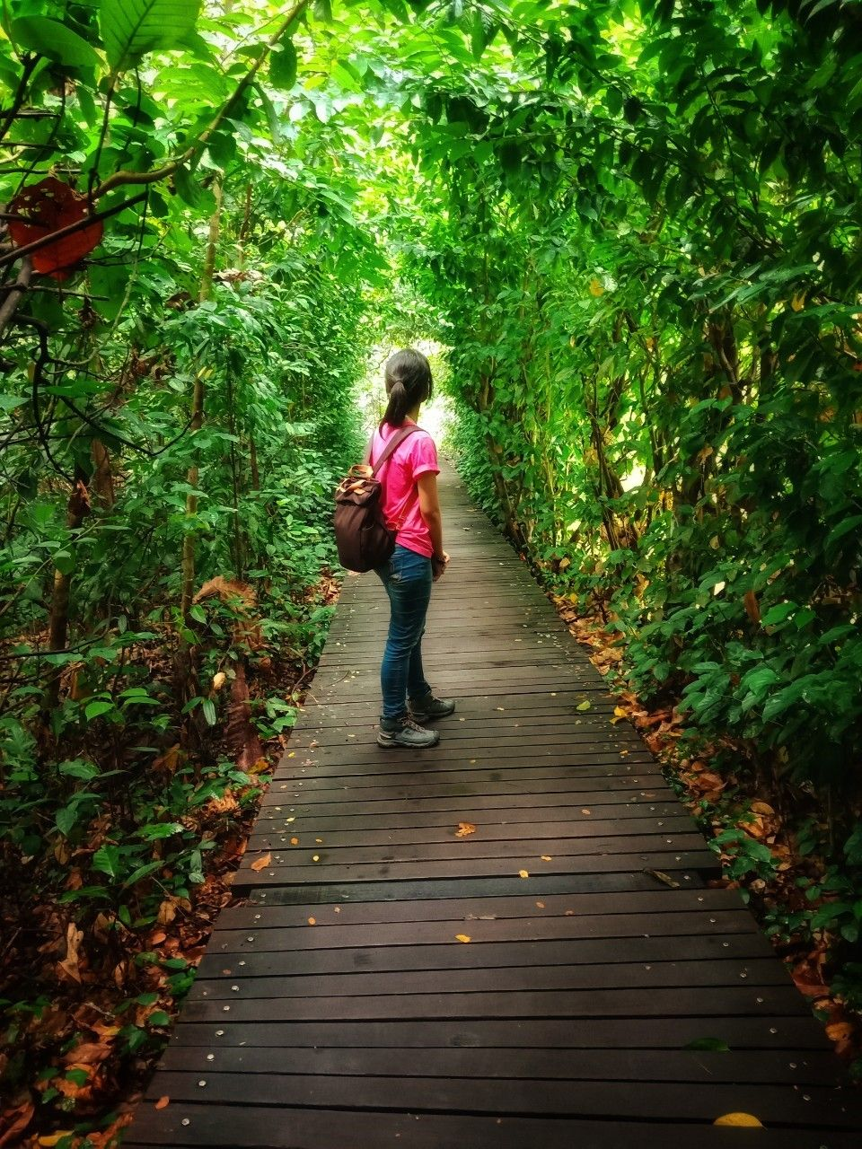 เดินป่ากลางเกาะสิงคโปร์ โลเคชั่นแบบนี้ก็มีด้วย!?