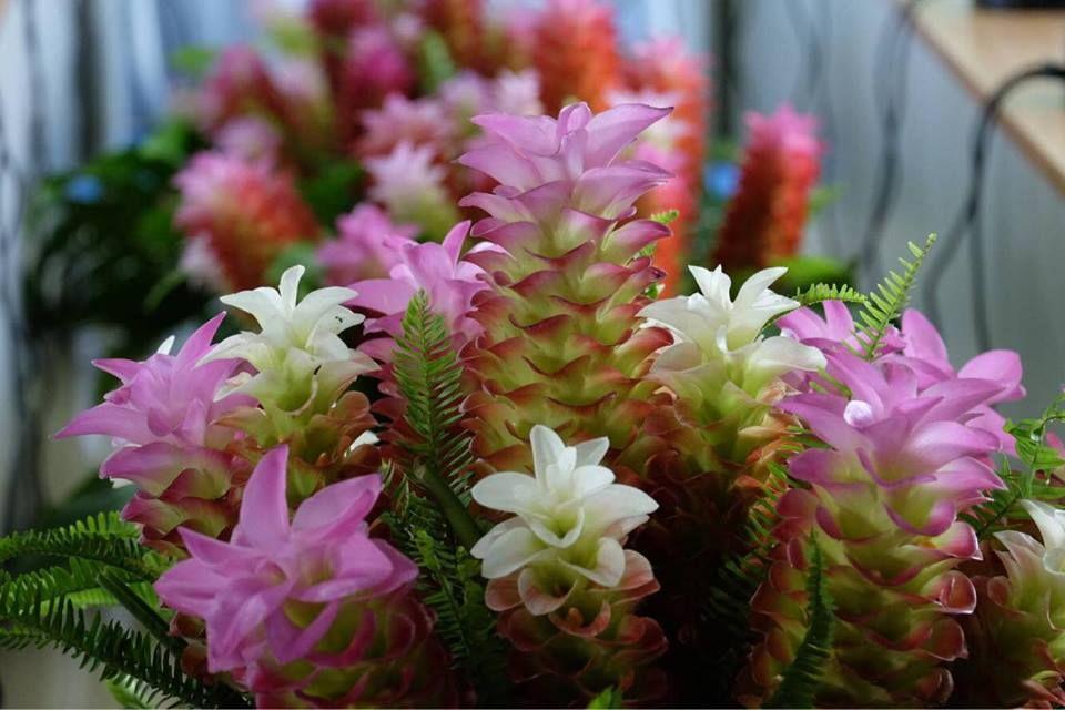 """""""ปทุมมา"""" ดอกไม้ของแม่ แพร่พันธุ์อยู่เชียงใหม่"""
