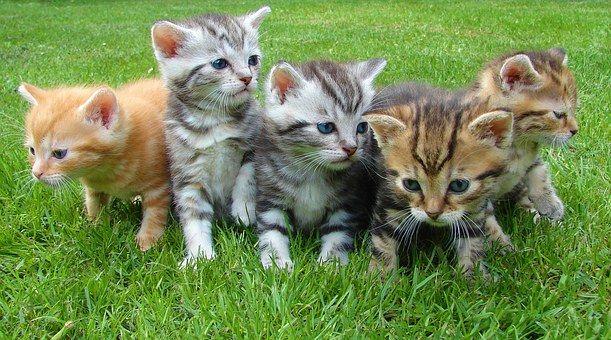จดหมายถึงแมว ฉบับที่ ๕ : บ้านเรามีแมวเพิ่มขึ้นเยอะเลย