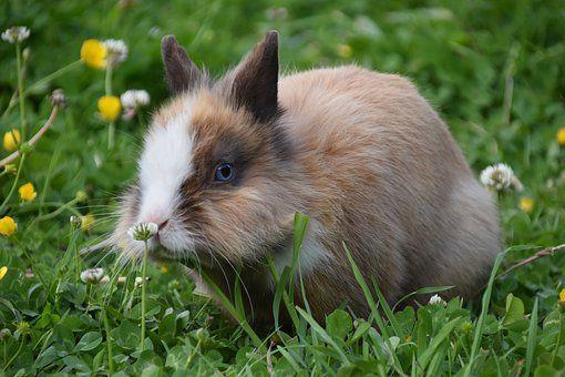 จดหมายถึงกระต่าย ฉบับที่ ๖ : ความสมบูรณ์ของครอบครัวคุณนายทัชช่า