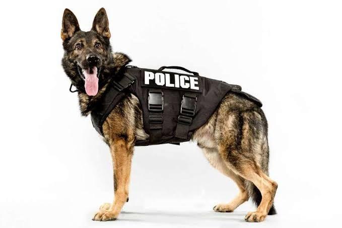 """สุนัข 5 สายพันธ์ุที่จัดว่าเป็น """"สุนัขตำรวจ"""" ที่เด็ดที่สุด!"""