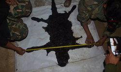 ตรวจซากซ้ำ พบกระสุนเจาะเสือดำ 8 รู ถูกยิงจากด้านหน้า