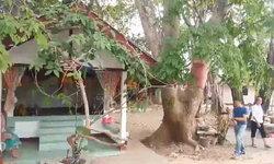 แห่ขอหวยต้นมะค่าแฝด อายุกว่า 100 ปี ข้างศาลเจ้าพ่อบ้าน