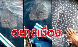 อย่างเชื่อง วาฬบรูด้า โผล่โชว์อวดโฉมสีสันแห่งท้องทะเลชุมพร