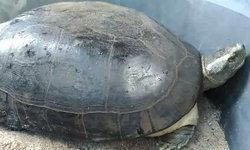 ฮือฮา เต่ายักษ์ให้โชคเจ้าของบ้าน ถูกรางวัลต่อเนื่อง ชาวบ้านแห่ส่องเลขเด็ด