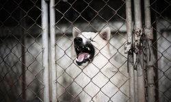 """วิกฤติ """"พิษสุนัขบ้า"""" ระบาดในวัว ประกาศควบคุม 22 จังหวัด"""
