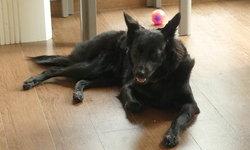 หมาเฝ้าศพ หลังเห่าร้องขอให้ช่วยเจ้าของ นอนเสียชีวิตคาเตียง