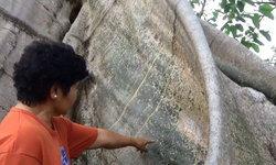 งวดนี้เน้นๆ 2 ตัว แห่ส่องเลขต้นเรืองยักษ์ 36 คนโอบ อายุ 500 ปี