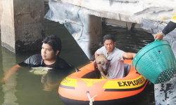 บุญของน้องหมา หนุ่มกระโดนลงน้ำช่วยเหลือหมาจรจัดตกสระน้ำดิบ