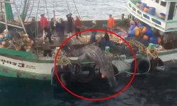 """อ้าง """"ฉลามวาฬ"""" ติดอวน แต่ปล่อยลงทะเลแล้วตาย ตร.จ่อเอาผิด"""