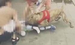 ชาวเน็ตวิจารณ์ยับ ร้านหมาผูกพิทบูลไว้ริมทางเท้า เด็ก 4 ขวบเดินผ่านโดนขย้ำขา