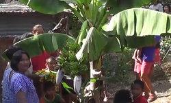 ใกล้หวยออก ฮือฮาต้นกล้วยประหลาดออกเครือแฝดมี 21 หวี 2 หัวปลี
