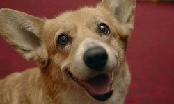 วิลโลว์ สุนัขคอร์กี้ตัวสุดท้ายของควีนเอลิซาเบธที่ 2 ตายแล้ว