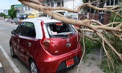 สุดเซ็ง กิ่งไม้ขนาดใหญ่หักทับรถเก๋งป้ายแดงเพิ่งออกมาได้ไม่กี่วัน