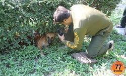 เวทนา สุนัขถูกถลกหนังตั้งแต่ก้นไปจนถึงลำตัว หนีตายซุกสวนโรงเรียน