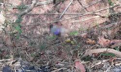จนท.ศูนย์วิจัยผลผลิตป่าไม้ เข้าป่าถูกอุ้มหายกลายเป็นศพ