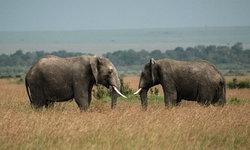 เด็ดขาด! จนท.เคนยาสังหาร 3 พรานป่าลักลอบเข้าอุทยาน หวังฆ่าช้าง
