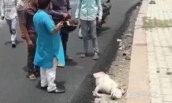 ชาวบ้านอินเดียเดือด คนงานทำถนนเทยางมะตอยทับหมาจรจัด ตายทั้งเป็น