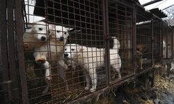 """ศาลเกาหลีใต้ตัดสิน """"ฆ่าสุนัขเพื่อกินเนื้อ"""" เป็นสิ่ง """"ผิดกฎหมาย"""""""