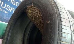 พบฝูงผึ้ง ทำรังในยางรถยนต์ เจ้าของอู่เผย เป็นผึ้งให้โชคลาภ